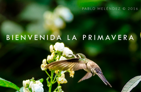 Imagen: Primavera
