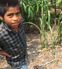 Imagen: Proyecto evidencia la necesidad en Seguridad Alimentaria del país