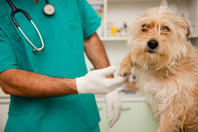 Imagen: CONCYT respalda proyecto para profesionales en zoonosis