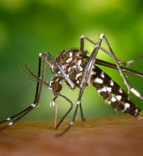 Imagen: Medidas preventivas por fiebre Chikungunya